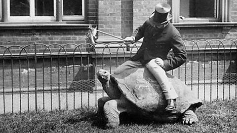 Лайонел Уолтер Ротшильд верхом на черепахе