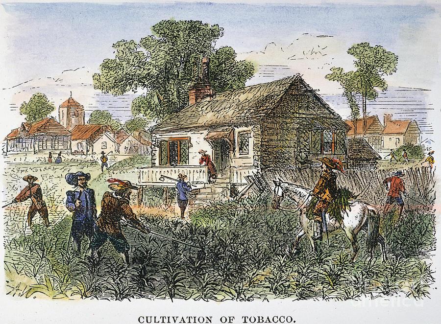 Табачная плантация в Виргинии, конец XVII века
